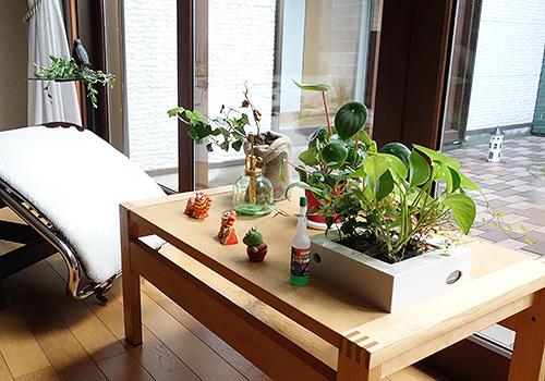 壁にかけられる観葉植物-16×16cm-C-スイカペペ ヘデラ